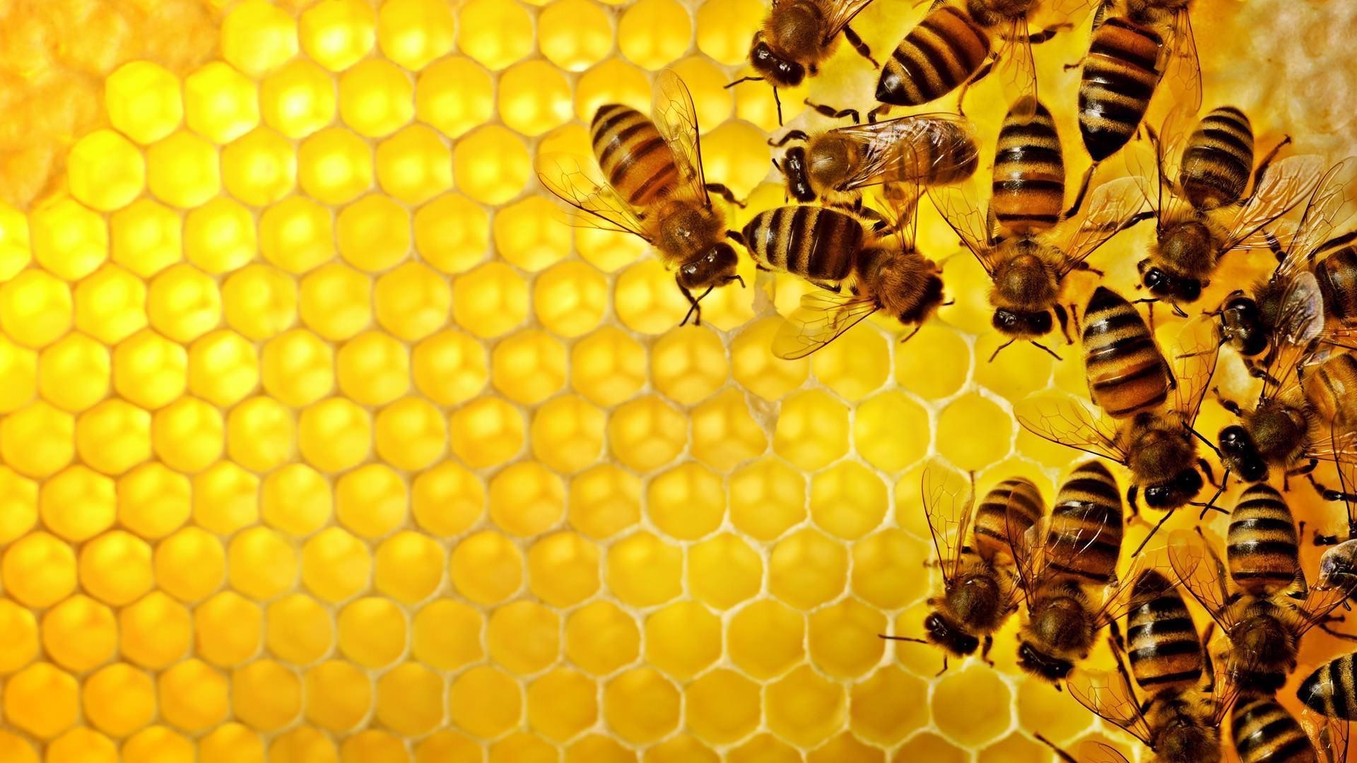 5 thoi diem uong mat ong tot cho da day