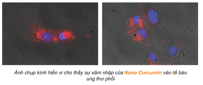 Nano curcumin nghiên cứu khoa học - CumarGold