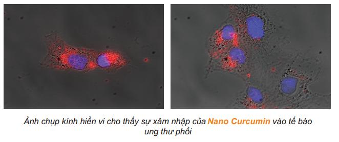 sự xâm nhập của nano curcumin vào tế bào ung thư phổi