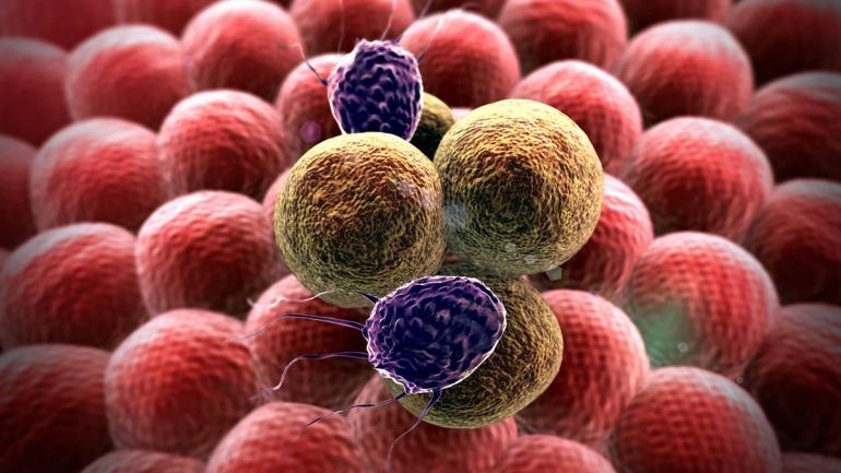ung thư có tính di truyền không