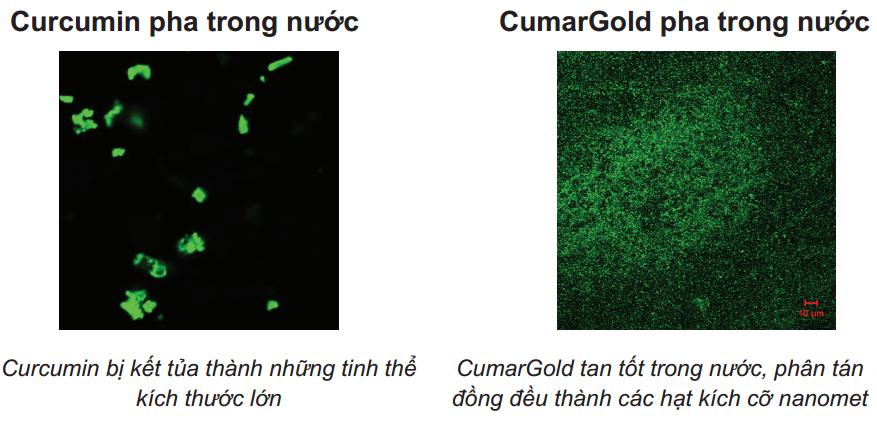 Khả năng tan trong nước của CumarGold (Nano Curcumin) so với Curcumin thường