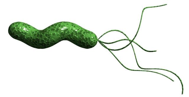 Vi khuẩn HP gây đau dạ dày.