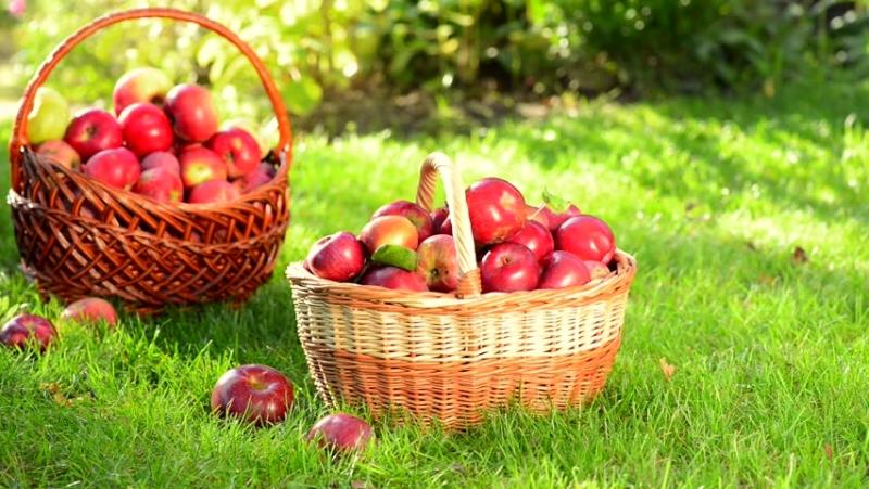 Táo là loại quả mà người đau dạ dày tá tràng nên ăn.