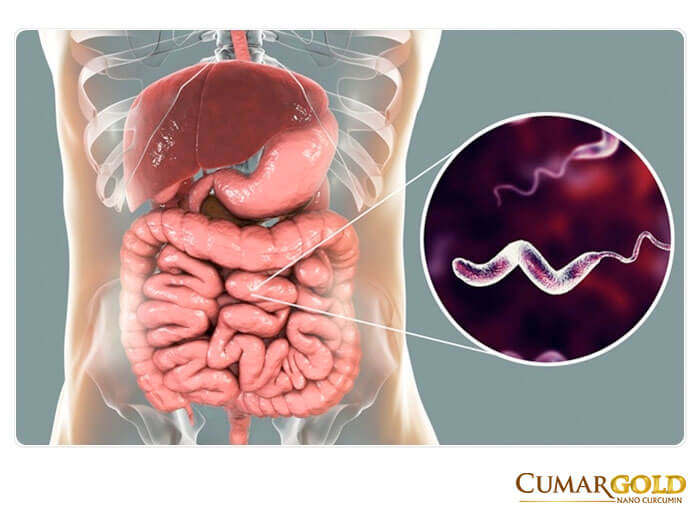 Vi khuẩn Campylobacter