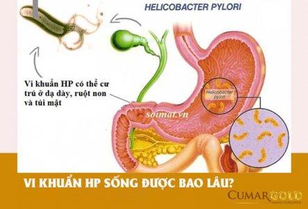 Vi khuẩn HP sống được bao lâu trong dạ dày và ngoài cơ thể?