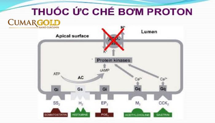 Phương pháp điều trị bằng thuốc ức chế bơm Proton