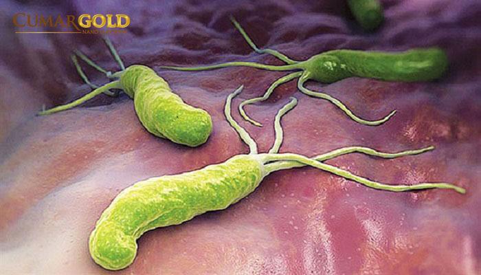 Vi khuẩn Hp lây qua đường nước bọt