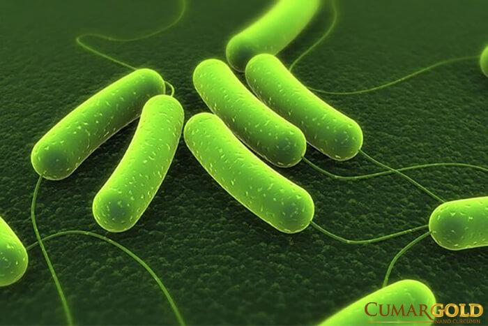 Nhiễm vi khuẩn HP