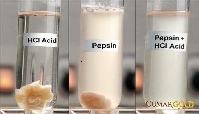 Acid và Pepsin
