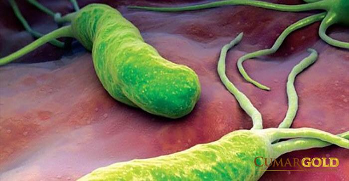 Và đây là hình ảnh vi khuẩn được phóng đại dưới kính hiển vi