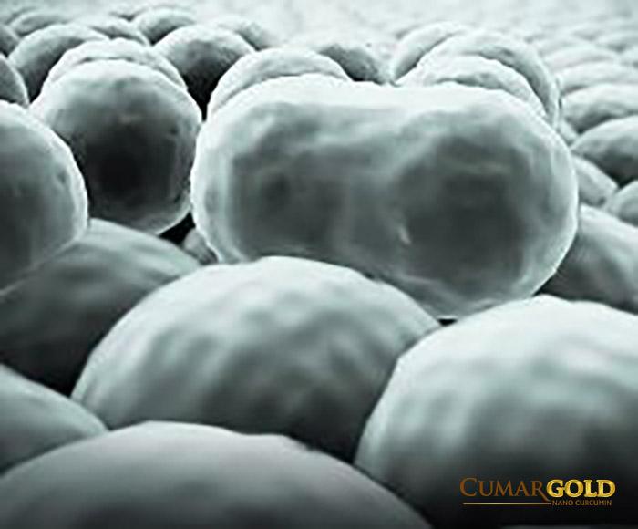 Hình ảnh vi khuẩn HP tồn tại dưới dạng cầu (coccoid)