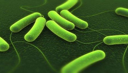 Phân tích tại sao vi khuẩn HP sống được trong dạ dày?