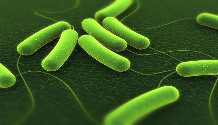 vi khuẩn hp sống trong dạ dày
