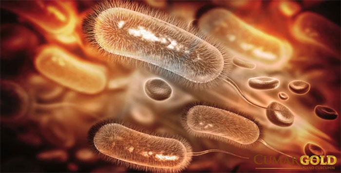 Hình ảnh vi khuẩn HP dạng dấu phẩy