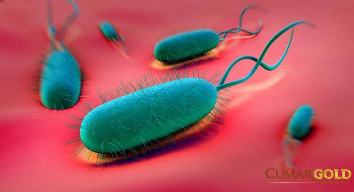 Vi khuẩn hp làm trẻ 9 tháng bị đau dạ dày