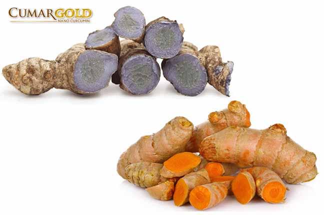 Chữa đau dạ dày bằng nghệ đen và nghệ vàng giúp trung hòa lượng acid, tăng tốc độ phục hồi ổ loét tại niêm mạc