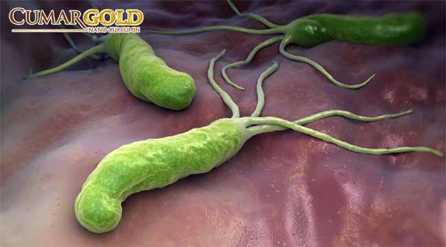 Chiết xuất gừng chuẩn hóa có khả năng ức chế khả năng hoạt động của vi khuẩn HP