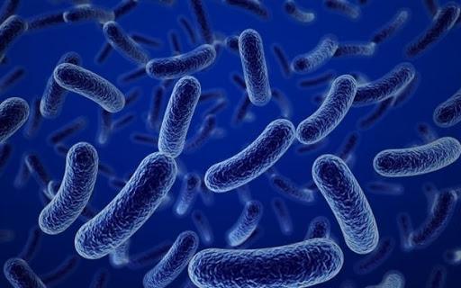Vách tế bào lợi khuẩn cải thiện hệ tiêu hóa hiệu quả